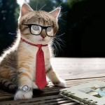 intellectual_cat