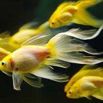 fish-aquarium-11