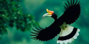 the_land_of_the_hornbills-sarawak-holiday_package-e1335413423596