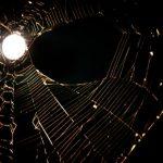 moon_spider_web_Jolynn_Keutzer_Bales_7-2-2012-e1341246250332